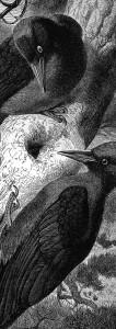 birds2(2)